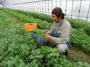 谷口さん収穫作業